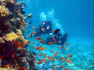S'occuper à de la plongée à Marbella