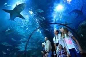 parc attraction Le Loro Parque Tenerife