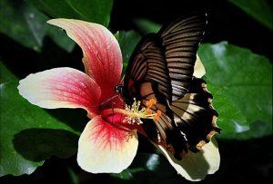 Butterfly Park d'Empuriabrava