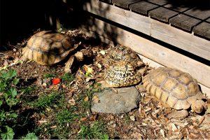 le centre de reproduction des tortues de l'Albera à llanca